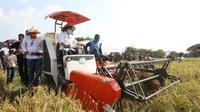 Menteri Pertanian Syahrul Yasin Limpo melakukan kunjungan kerja dalam rangka panen padi di Desa  Karang Tumaritis, Kecamatan Haurgeulis, Kabupaten Indramayu. (Dok Kementan)