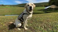 Anjing bernama Sully setia menemani Presiden ke-41 AS George H. W. Bush hingga akhir hayatnya. (dok. Instagram @sullyhwbush/https://www.instagram.com/p/CGIqVGVFuwC/)
