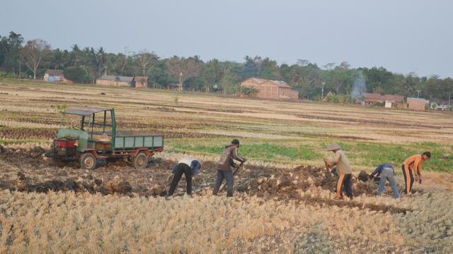 Kisah Petani Miskin Terpaksa Jual Bongkahan Tanah Sawah Musim Cilacap