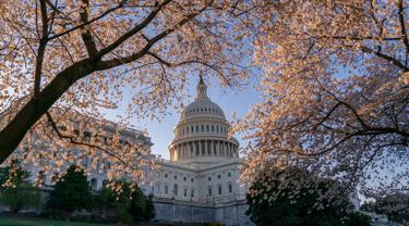 Gedung Capitol atau kantor Kongres terlihat di tengah pohon sakura yang bermekaran di Washington, Amerika Serikat, Senin (1/4). Bunga sakura ini merupakan pemberikan Wali Kota Tokyo pada tahun 1912 yang meruplipakan hadiah sebagai bentuk persahabatan kedua negara. (AP/J. Scott Applewhite)