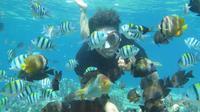 Wisata Pantai Olele di Gorontalo (Liputan6.com/Arfandi Ibrahim)