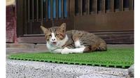 6 Ekspresi Kucing Menguap Ngantuk Ini Bikin Gemas Lihatnya (sumber: Twitter/raindlyldniar__)