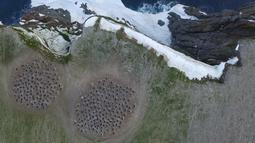Pemandangan dari atas, penguin Adelie membuat dua kelompok di Pulau Heroina, Danger Islands, Antartika (2/3). Selama beberapa dekade terakhir, jumlah penguin Adelie di Semenanjung Antartika telah mengalami penurunan yang drastis.(Thomas Sayre-McCord/AFP)