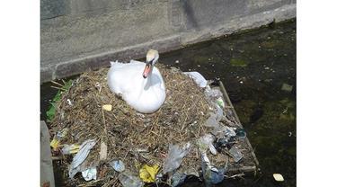 5 Foto Hewan yang Terdampak Pencemaran Lingkungan Ini Miris Lihatnya