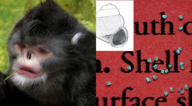 10 Hewan Terunik yang Ditemukan Tahun 2015