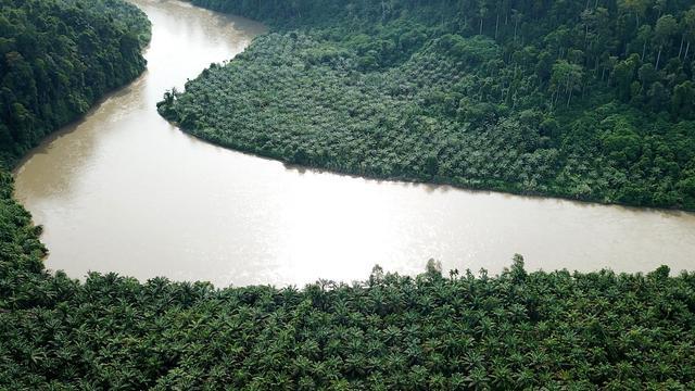 Penebangan Kebun Kelapa Sawit Ilegal di Taman Nasional Gunung Leuser