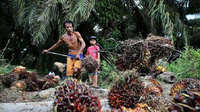 Meski harga sawit cenderung belum stabil, komoditi ini tetap menjadi primadona bagi petani di Provinsi Jambi. (Dok. Istimewa/B Santoso)