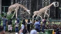 Wisatawan saat mengamati jerapah di Taman Margasatwa Ragunan, Jakarta, Jumat (14/5/2021). Pemprov DKI Jakarta pada libur Lebaran 2021 membuka sejumlah tempat wisata, salah satunya Taman Margasatwa Ragunan. (merdeka.com/Iqbal S. Nugroho)