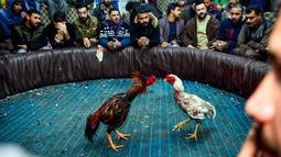 Penonton menyaksikan sabung ayam di Kota Najaf, Irak, Sabtu (26/1). Sabung ayam di Irak menjadi ajang perjudian, meski banyak juga yang menonton hanya untuk hiburan. (Haidar HAMDANI/AFP)