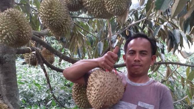 Yayat, pemilik sekaligus pengelola kampung durian di Garut, Jawa Barat, menunjukan buah durian siap panen di kebunnya (Liputan6.com/Jayadi Supriadin)
