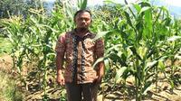 Abdul bangkit menanam jagung setelah gempa Palu menghancurkan tempat tinggalnya. (Dok FAO Indonesia)