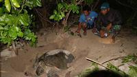 Sertu Wisandy Yuliastriono Suwardi bersama Ading menyaksikan penyu bertelur di Pulau Derawan. (foto: Istimewa)