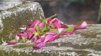Ilustrasi – Bunga kerap digunakan pawang hujan saat  menjalani ritual. (Liputan6.com/Muhamad Ridlo)