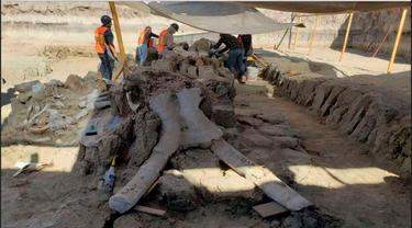 Temuan fosil mamut raksasa oleh sekelompik tim arkeolog di lokasi proyek bandara baru Meksiko.