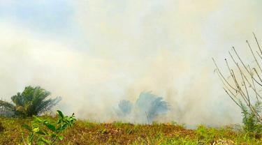 Kebakaran gambut di Kabupaten Siak terus meluas dan mengeluarkan asap.