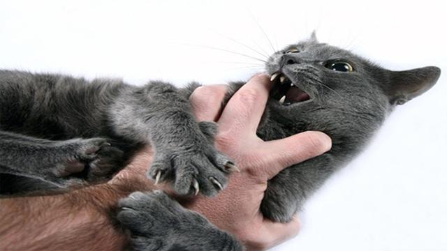 Download 97+  Gambar Kucing Remaja Terlihat Keren HD