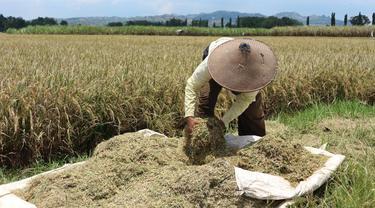 Dari Batas Negara, Kementan Lepas Ekspor Komoditas Pertanian Asal NTT