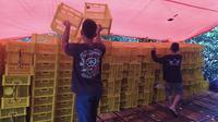 Beberapa pegawai PT AFA, eksportir manggis asal Tasikmalaya, terpaksa berhenti akibat wabah virus Corona di Cina.(Liputan6.com/Jayadi Supriadin)