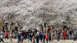 Pengunjung menikmati bunga sakura selama festival musim semi di Taman Yuyuantan, Beijing, China, Sabtu (30/3). Festival bunga sakura yang sangat populer ini digelar setiap tahun. (AP Photo/Andy Wong)