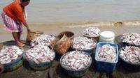 Seorang istri nelayan menata ikan tangkapan suaminya, di Desa Tlonto Raja, Pamekasan, Madura. Para nelayan membatasi melaut menyusul sedikitnya ikan yang bisa ditangkap.(Antara)