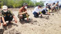 Penanaman bibit mangrove oleh Badan Restorasi Gambut dan Mangrove di Kota Dumai. (Liputan6.com/M Syukur)
