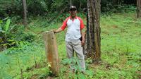 Tapal batas lahan perhutani peninggalan Belanda asli di Karangreja, Cipari. Diduga, batas lahan perhutani saat ini menerabas lahan yang sebelumnya milik masyarakat. (Liputan6.com/Muhamad Ridlo)