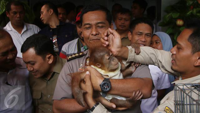 45 Gambar Hewan Langka Di Jakarta HD