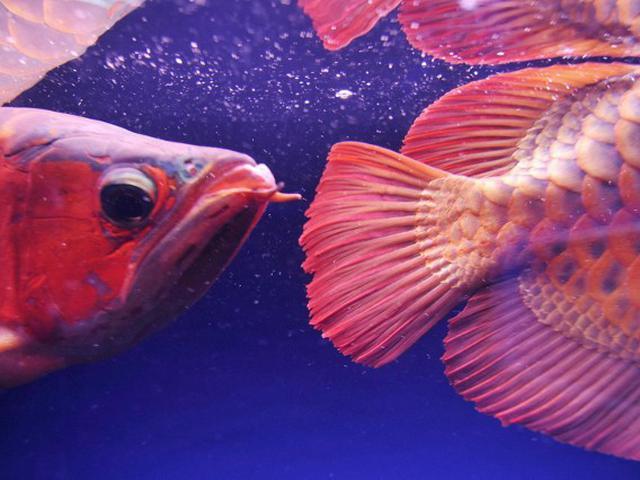 Jenis Jenis Ikan Arwana Dan Harganya Yang Paling Populer Untuk Dipelihara Hot Liputan6 Com