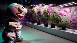 Pohon ganja imitasi dipajang di Cannabition Cannabis Museum, Las Vegas, AS, Selasa (18/9). Museum ini menjadi destinasi wisata baru di Las Vegas. (AP Photo/John Locher)