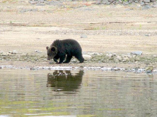 Induk beruang mulai meninggal anak-anaknya | Photo: Copyright dailymail.co.uk