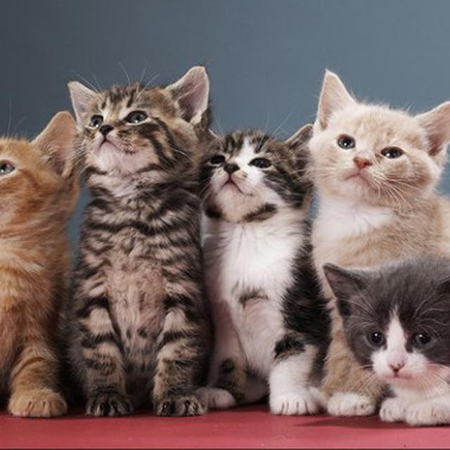 Ternyata Warna Bulu Bisa Menunjukkan Kucing Galak Atau Jinak Global Liputan6 Com