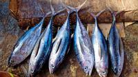 Ikan Tuna (Photo By 27707 On Pixabay)