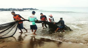 Beberapa orang nelayan maelo pukek yang merupakan tradisi turun temurun dari nenek moyang.