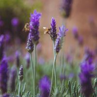 Ilustrasi serangga | unsplash.com