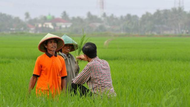 Jokowi Janji Selesaikan Masalah Tenaga Penyuluh Pertanian Bisnis