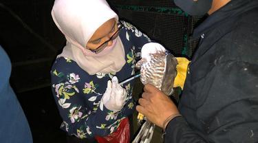 Salah seorang dokter hewan Taman Satwa Cikembulan, Garut, Jawa Barat tengah melakukan vaksinasi hewan pada salah satu burung peliharaan di sana.