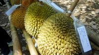 Durian Balaikarangan, Kalimantan Barat