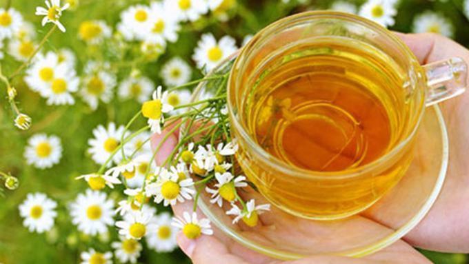 Hasil gambar untuk teh chamomile