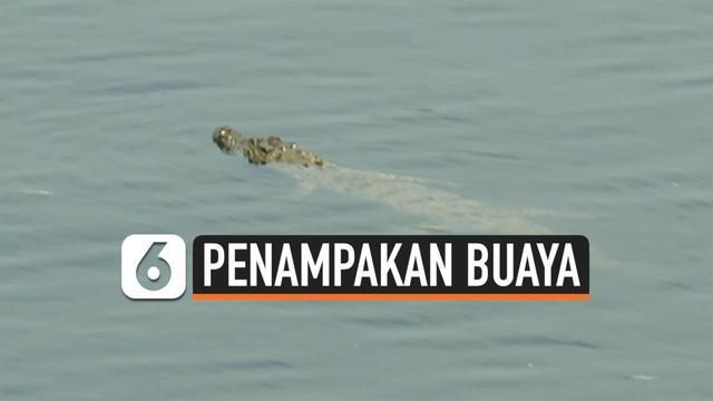 Kawanan buaya menampakkan diri di sungai Bengawan Solo Lamongan Jawa Timur. Namun warga tetap beraktivitas di sungai meski buaya tersebut kerap muncul.