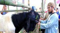 """Kambing Peranakan Etawa dipamerkan pada acara """"Apel Siaga Penyuluh se-Jawa Tengah, Antisipasi Kekeringan dan Pengamanan Produksi Pangan Tahun 2010"""" di Secang, Magelang, Jateng. (Antara)"""