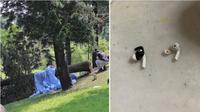 Seorang wanita Singapura meninggal tertimpa pohon tumbang saat sedang berlari sambil memakai earbuds (Foto: Straits Times).