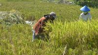Penanaman bahan pangan di Surabaya, Jawa Timur (Foto: Dok Pemkot Surabaya)