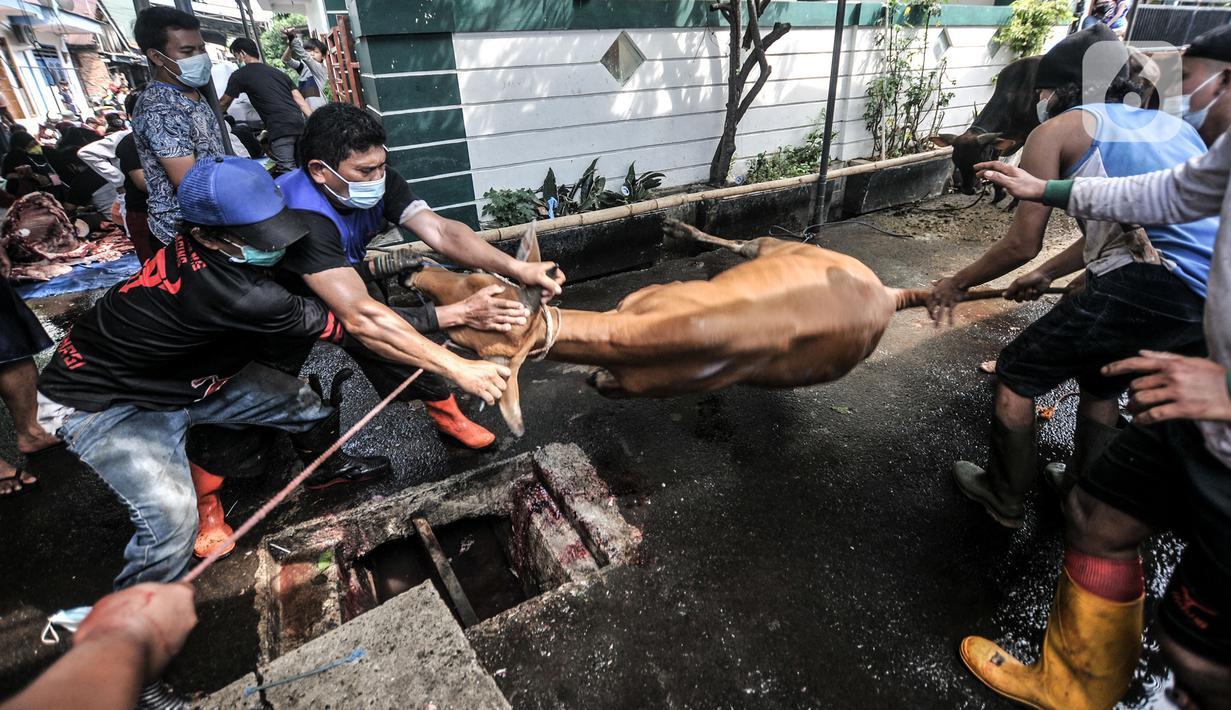 Panitia bersiap menyembelih hewan kurban saat perayaan Hari Raya Idul Adha 1442 H di Musala Nurul Huda, Jakarta, Selasa (20/7/2021). Di tengah pandemi COVID-19, warga di sejumlah wilayah Ibu Kota tetap menggelar penyembelihan hewan kurban meski secara terbatas. (merdeka.com/Iqbal S. Nugroho)