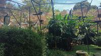 Telur bangau tongtong di Kebun Binatang Bandung masih ada yang dierami