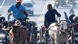 Para peserta memacu tunggangannya saat ambil bagian dalam perlombaan balap gerobak sapi di Kolombo, Sri Lanka, Sabtu (20/4). (LAKRUWAN WANNIARACHCHI/AFP)