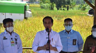 Tinjau Panen Raya di Indramayu, Presiden Jokowi Bangga Produktivitas Padi Petani Meningkat