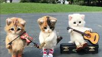 Intip foto-foto boneka kucing yang menggemaskan dengan berbagai aktivitas seperti manusia. (Foto: Instagram/@chata528)