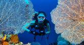 Widika memang dikenal sebagai sosok perempuan yang gemar traveling. Hal tersebut terbukti saat ia ditunjuk menjadi host acara petualang di salah satu televisi swasta Tanah Air. Saat menjelajahi indahnya lautan Raja Ampat, ia tak lupa mengabadikan fotonya di antara karang. (Liputan6.com/IG/@wdkds)