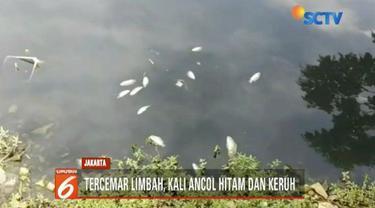 Petugas masih menyelidiki penyebab sejumlah ikan-ikan yang ditemukan mati di Kali Ancol, Jakarta Utara.
