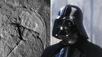 """Fosil """"Vaderlimulus Tricki"""" yang mirip dengan wajah Darth Vader. (Foto: Mirror)"""